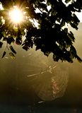 The sun`s meeting with the spider web. royalty free stock images