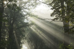 Sun's rays Royalty Free Stock Photo