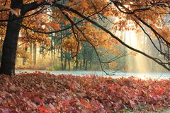 The sun's rays in autumn meadow Royalty Free Stock Images