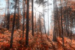 The sun`s rays in the autumn Park, sunset through the leaves of trees royalty free stock image