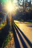 The sun's rays for autumn trees with shadows on the road Royalty Free Stock Photos