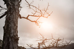 Sun's rays through the branches of the tree Stock Image