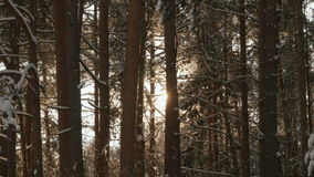 Sun`s rays through the branches of trees stock video footage