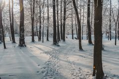 The sun`s rays break through the branches of a tree. Frozen park in winter under snow. stock photo