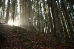 The sun`s rays break through the fog royalty free stock photography