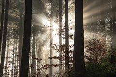 The sun`s rays break through the fog stock photo