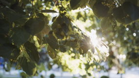 Sun`s rays breaking through the leaves of the tree stock footage