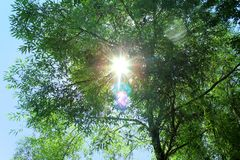 The sun`s rays bursting through the green branches Royalty Free Stock Photo
