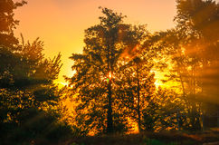The sun's rays filtering through a tree early Royalty Free Stock Photography