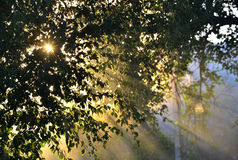 Sun's rays through the foliage Royalty Free Stock Images