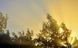 Sun's rays through the foliage Stock Image