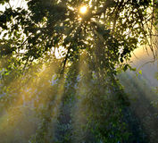 Sun's rays through the foliage Royalty Free Stock Image