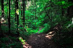 Sun's rays in the forest. The sun's rays on the road in the dark forest Stock Photo