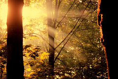 The sun's rays Royalty Free Stock Images