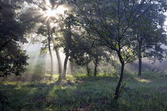 The sun's rays in the forest Stock Images