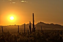 Sun's Rays Kissing the Desert Mountains. Sunset rays over sonoran landscape silhouetting a family of cactus, moutains and scrubland Royalty Free Stock Photos