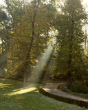 The sun's rays make  in autumn park Stock Photography