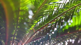 The sun's rays make their way through the branches of palm trees. Sky, clouds, b. The branches of a palm tree swaying in the wind stock video
