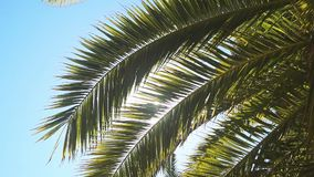 The sun`s rays make their way through the branches of palm trees. Sky, clouds, breeze.  stock video footage