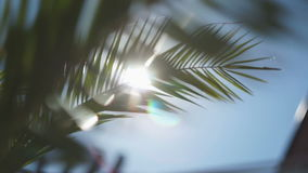 The sun's rays make their way through the branches of palm trees