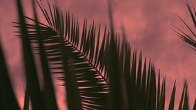 Branch of a palm tree against a cloudy sky at sunset, 4K. The sun`s rays make their way through the branches of palm trees. Sky, clouds, breeze stock video
