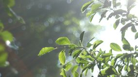The sun`s rays make their way through the greenery, the backlight. 4k stock footage
