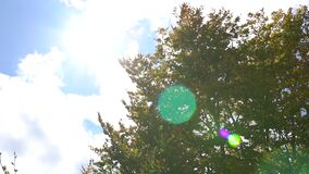 The sun`s rays make their way through the leaves of the tree. Lens flare effect