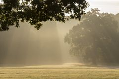Rays of sunshine on Southampton Common stock photography