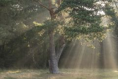 Rays of sunshine on Southampton Common royalty free stock photo