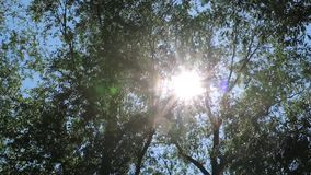 Sun`s rays pass through the trees and create beautiful glares.  stock video footage
