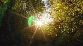 Sun`s rays pass through the trees. And create beautiful glares stock video