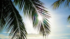 The sun`s rays passing through the palm branch. Tropical trees on the coast. Tropical trees on the coast.The sun`s rays passing through the palm branch stock video