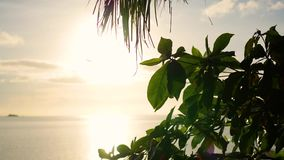 The sun`s rays passing through the palm branch. Tropical trees on the coast. Sunset time. Tropical trees on the coast.The sun`s rays passing through the palm stock footage