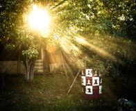 The sun's rays passing through the pear and lighting plot. tinte Royalty Free Stock Image