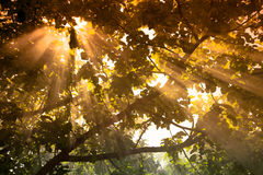 The sun's rays passing through the pear and lighting plot. tinte Royalty Free Stock Photography