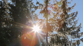 Sun`s rays passing through the tops of trees covered with snow. Fabulous winter landscape.  stock footage