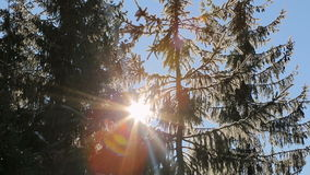 Sun`s rays passing through the tops of trees covered with snow. Fabulous winter landscape stock video