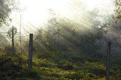 The sun's rays penetrate through the fog Royalty Free Stock Photo