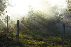 The sun's rays penetrate through the fog Royalty Free Stock Photo