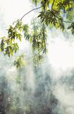 Sun`s rays penetrate through the trees and smoke. Nature. Sun`s rays penetrate through the trees and smoke royalty free stock image