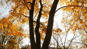 The sun`s rays shine through the autumn leaves of trees. Autumn time. Slow motion stock video