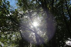 The sun`s rays Shine through the branches Royalty Free Stock Photos