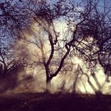 The sun's rays shine through the fog and tree branches Royalty Free Stock Photos