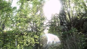 The sun`s rays shine through the green leaves of the tall trees on a spring day. Stock footage. Tree background in the stock video