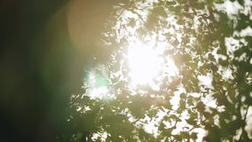 The sun`s rays Shine through the leaves. Nice shots. stock video footage
