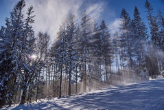 The sun's rays in a snowy forest Stock Images