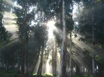 The sun`s rays in the sunrise in the fog, in a mysterious forest stock photo