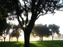 Sun's Rays Through Tree Branches Stock Photography