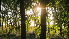 The sun's rays through the trees in a forest at sunset stock video footage