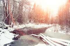 Sun's rays in winter forest Stock Photo